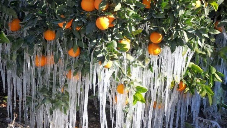 Tarımcılar Dikkat ! Bahar geç gelecek…