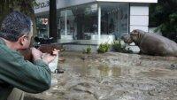 Gürcistan'da sel felaketinde hayvanlar kaçtı !