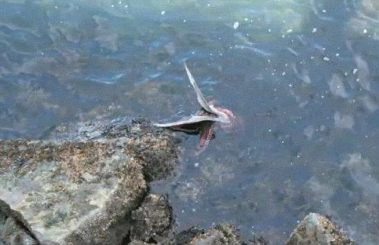 Böyle av gördünüz mü?