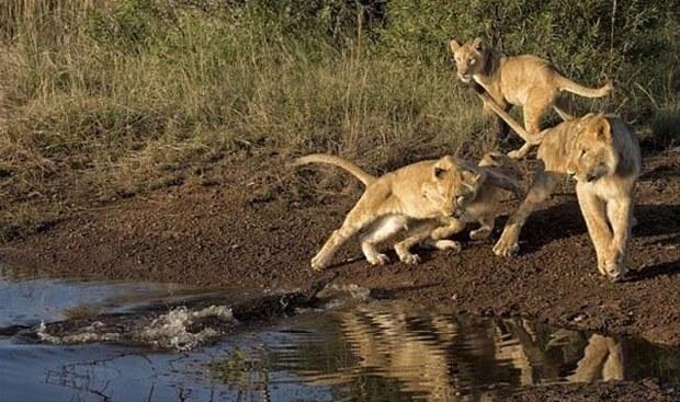 Hayvanlar dünyasından vahşi kareler!