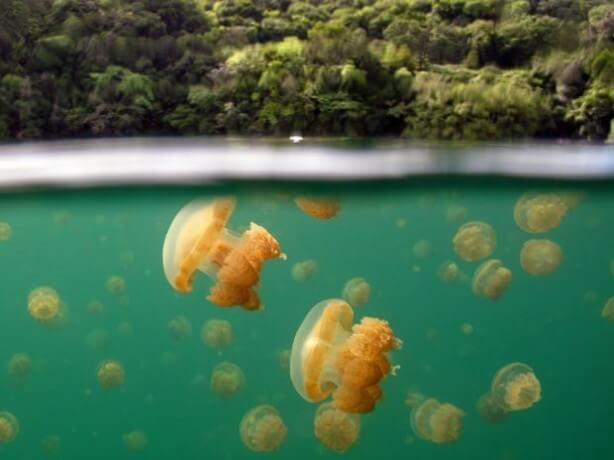 Suyun altında bizi neler bekliyor