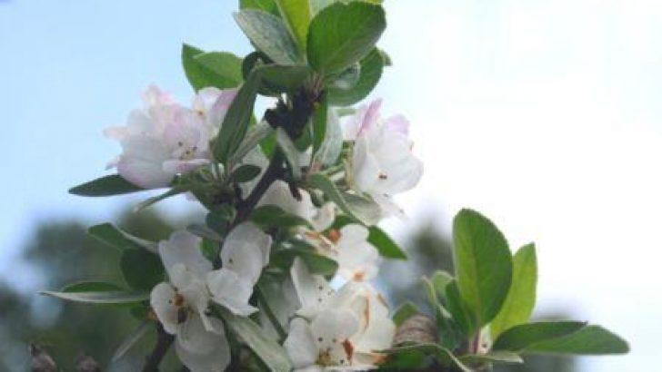 Ağaçlar Sonbaharda Çiçek Açtı
