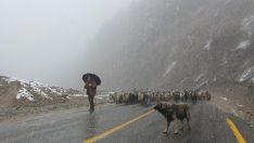 Rize'nin Yükseklerinde Kar Etkili Oluyor…