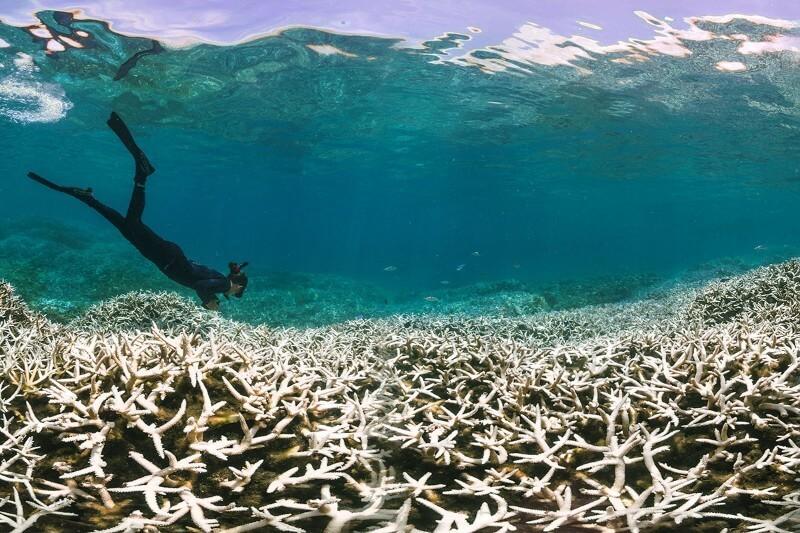 mercan-beyazlasmalari