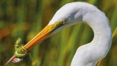 2017 yılının en iyi kuş fotoğrafları