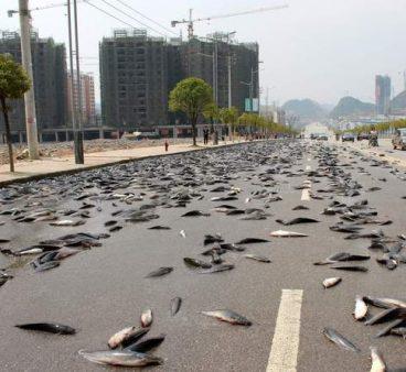 Balık Yağmuru Nedir?
