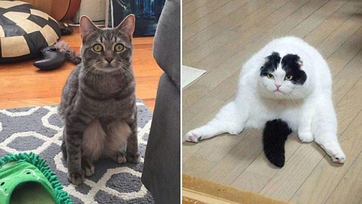 Rahatına düşkün kediler