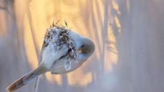 2017'nin en başarılı kuş fotoğrafları