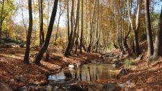 İdilli Vadisi'nde, sonbahar güzelliği