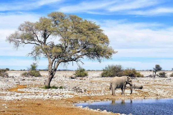Dünyanın koruma altındaki ekosistemleri: Milli Parklar