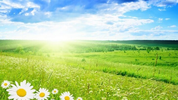 Bahar Bekleyenlere Müjde !