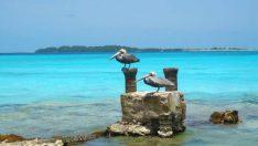 Venezuela Los Roques Adası