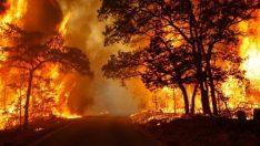 Orman Yangınlarına Karşı Dikkat !