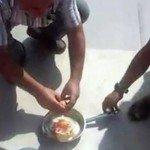 Aşırı Sıcakların Hareketi: Yumurta Pişirme