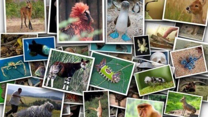 Doğada nadir bulunan en ilginç türler