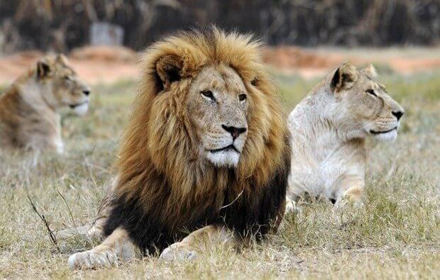 Hayvanlar dünyasından inanılmaz anlar!