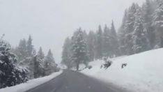 İtalya'dan Kar Haberi Var…