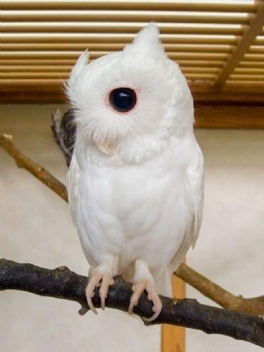 Nadir görülen büyüleyici albino hayvanlar