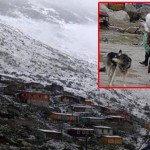 Rize'de Yaylalara Kar Düştü…