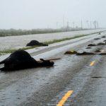 abdde-harvey-kasirgasi-yikimi-25-150x150 ABD'de Harvey Harikanı yıktı! Haberler