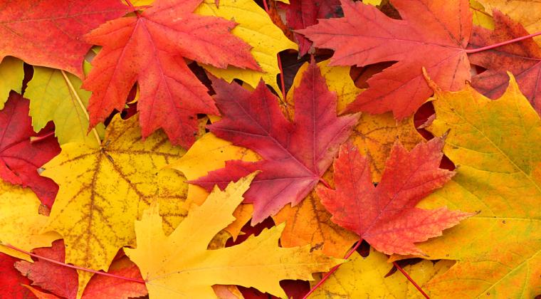 23 Eylül Sonbahar Ekinoksu Nedir?