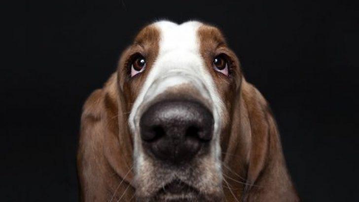 Köpeklerin kişilikleride insanlara benzer