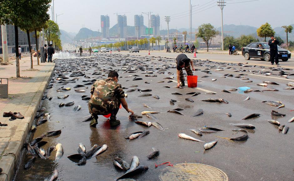 balık yağmuru nasıl oluşur