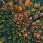 boludan-sonbahar-ve-kis-manzaralari-13-150x150 Bolu'dan sonbahar ve kış manzaraları Haberler