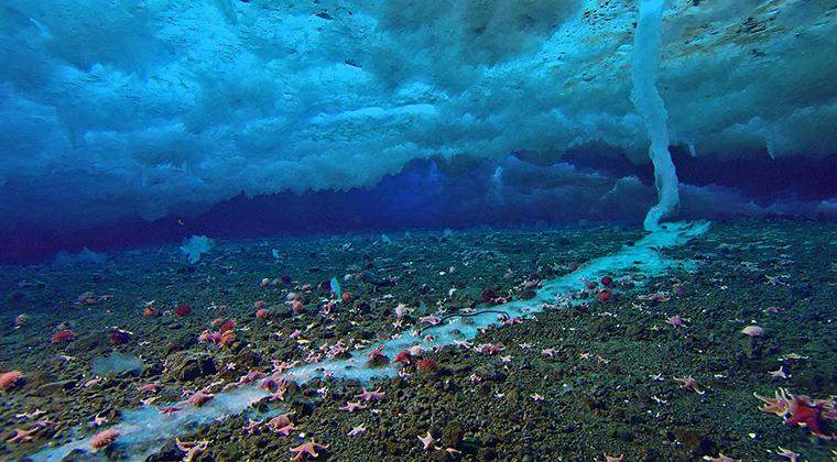 Ölümcül Su Altı Buz Saçağı Nedir? Nasıl Oluşur?