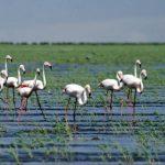 Sultansazlığı Kuş Cenneti'ndeki kuraklıktan su takviyesi yapıldı!
