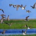 sultansazligi-kus-cennetindeki-kurakliktan-su-takviyesi-yapildi-9-150x150 Sultansazlığı Kuş Cenneti'ndeki kuraklıktan su takviyesi yapıldı! Haberler