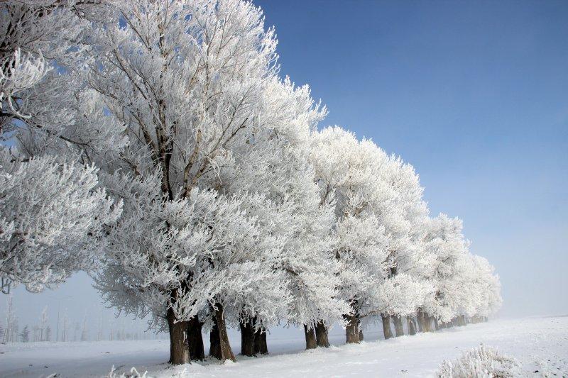 erzurumda-dusen-kiragi-sonrasi-gorsel-solen Hava Forum 2020-2021 Kış Tahmini Haberler