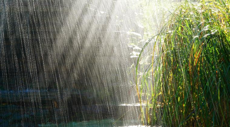 cakal-yagmuru-nedir-nasil-olusur Çakal Yağmuru Nedir? Sözlük