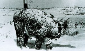 Tarihi Ölümcül Kar Fırtınası 1972 İran: 8 Metre Kar, 4000 Ölü!